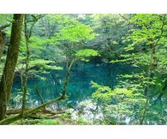 【ご近所さん歓迎】  青森県中津軽郡西目屋村田代神田の白神山地の中継
