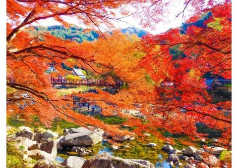 【ご近所さん歓迎】愛知県豊田市足助町飯盛の香嵐渓の中継