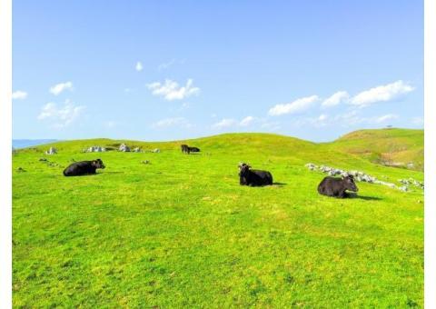 【ご近所さん歓迎】愛媛県上浮穴郡久万高原町西谷の四国カルストの中継