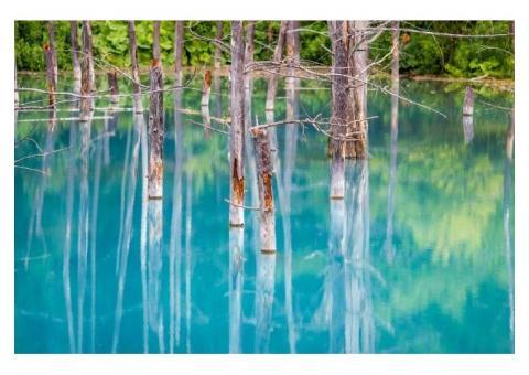 【ご近所さん歓迎】北海道上川郡美瑛町白金の青い池の中継