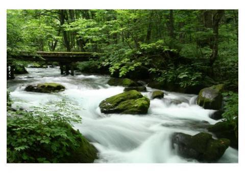 【ご近所さん歓迎】 青森県十和田市奥瀬の奥入瀬渓流周辺の中継