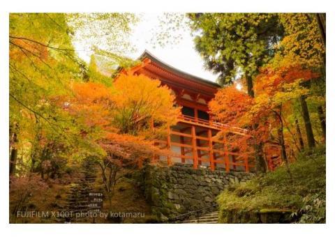 【ご近所さん歓迎】滋賀県大津市坂本本町の比叡山の中継