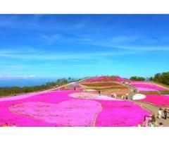 【ご近所さん歓迎】愛知県北設楽郡豊根村坂宇場の茶臼山高原の体験共有