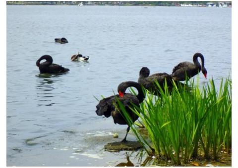 【ご近所さん歓迎】茨城県水戸市波の千波湖の体験共有