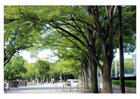 【ご近所さん歓迎】 東京都渋谷区代々木神園町の代々木公園の体験共有