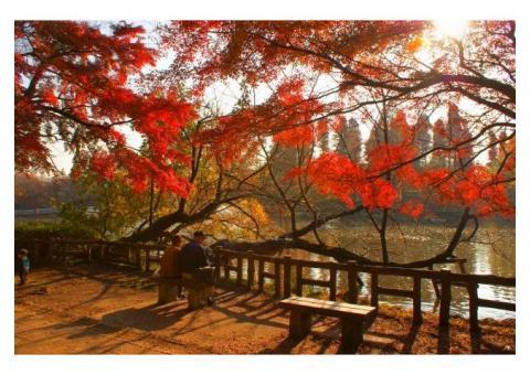 【ご近所さん歓迎】 東京都武蔵野市御殿山の井の頭公園の体験共有