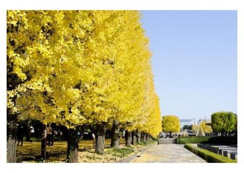 【ご近所さん歓迎】 東京都立川市緑町の国営昭和記念公園の体験共有