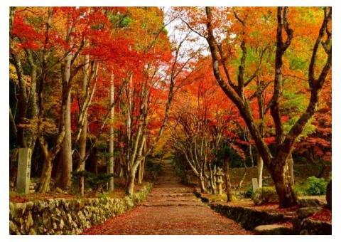 【ご近所さん歓迎】滋賀県長浜市木之本町古橋の 鶏足寺の体験共有