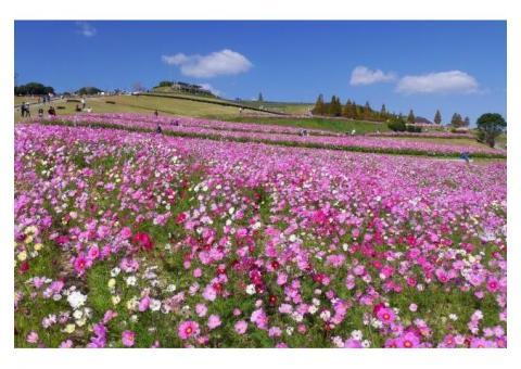 【ご近所さん歓迎】兵庫県淡路市楠本の淡路はなさじきの体験共有