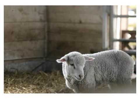 【ご近所さん歓迎】千葉県富津市田倉のマザー牧場の体験共有