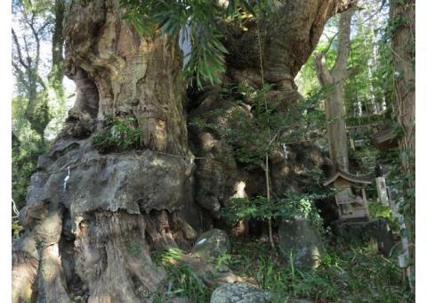 【ご近所さん歓迎】静岡県熱海市西山町の来宮神社の体験共有