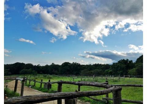 【ご近所さん歓迎】 栃木県那須郡那須町湯本の那須高原南ヶ丘牧場の体験共有
