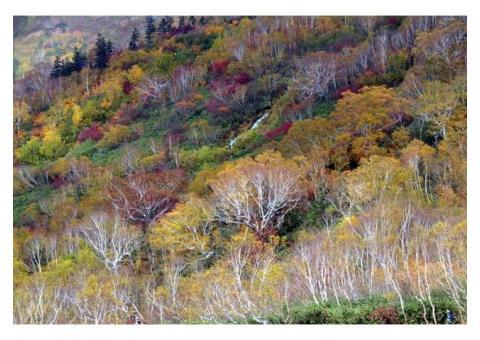 【ご近所さん歓迎】長野県北安曇郡小谷村北小谷の雨飾山の体験共有