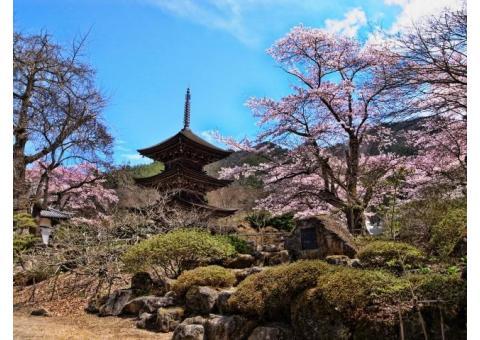 【ご近所さん歓迎】長野県上田市別所温泉の塩田平の体験共有