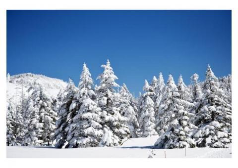 【ご近所さん歓迎】長野県茅野市北山の北八ヶ岳の体験共有