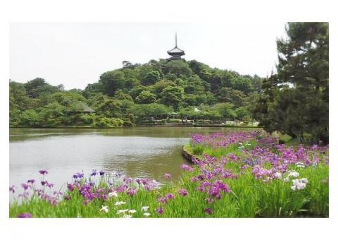 【ご近所さん歓迎】 神奈川県横浜市中区中区本牧三之谷の三溪園の体験共有