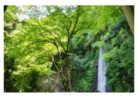 【ご近所さん歓迎】岐阜県養老郡養老町高林の養老の滝の体験共有