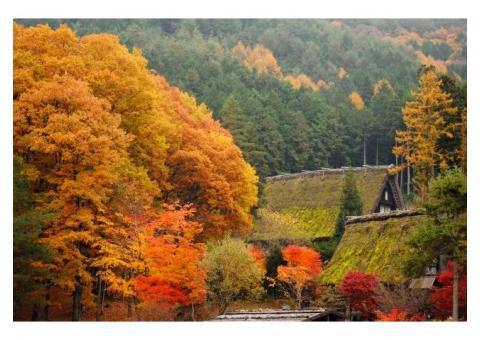 【ご近所さん歓迎】岐阜県高山市の飛騨高山の体験共有