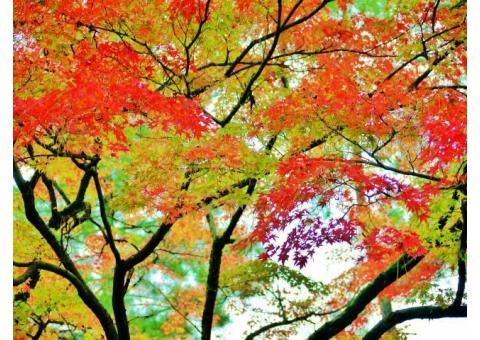 【ご近所さん歓迎】 石川県金沢市小立野の天徳院の体験共有