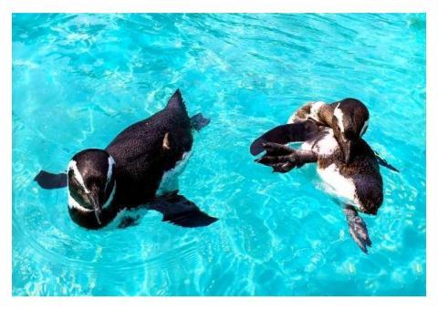 【ご近所さん歓迎】石川県七尾市能登島曲町ののとじま水族館の体験共有