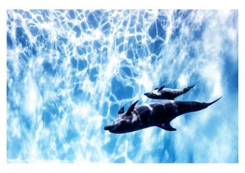 【ご近所さん歓迎】愛知県名古屋市港区港町の名古屋港水族館の体験共有