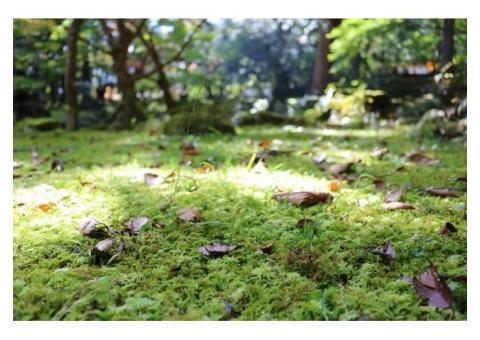 【ご近所さん歓迎】 三重県津市美杉町上多気の北畠氏館跡庭園の体験共有