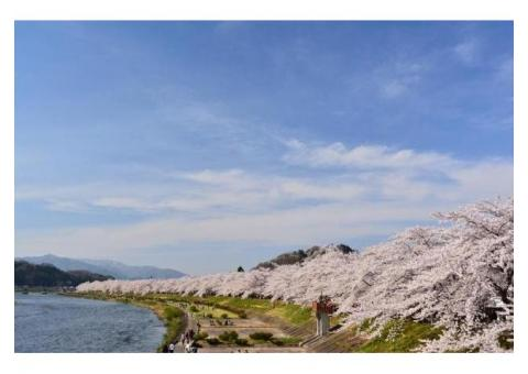 【ご近所さん歓迎】 秋田県仙北市の角館の桜の体験共有
