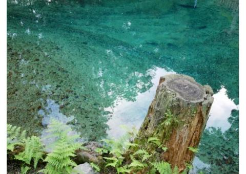 【ご近所さん歓迎】 山口県美祢市秋芳町別府水上の別府弁天池の体験共有