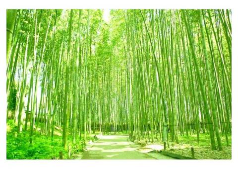【ご近所さん歓迎】 京都府京都市右京区嵐山の嵯峨野の体験共有