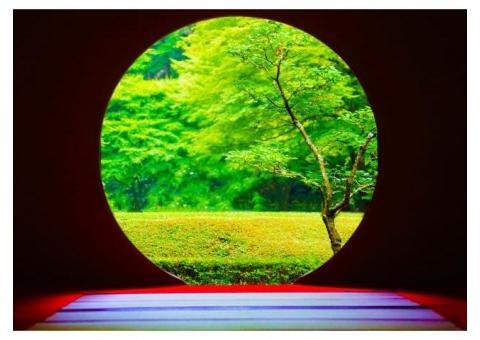 【ご近所さん歓迎】 神奈川県鎌倉市山ノ内の明月院 の体験共有
