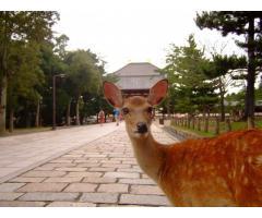 奈良と東大寺をご説明します